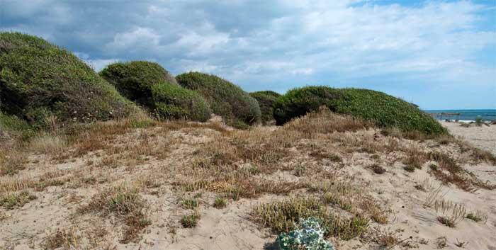 dune-capocotta